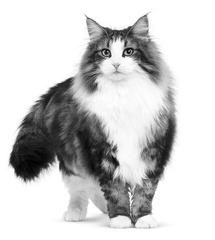 Vi levere kattefoder lige til din dør, direkte fra dansk dyrehandel